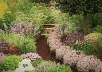 Jardin zen aux plantes médicinales