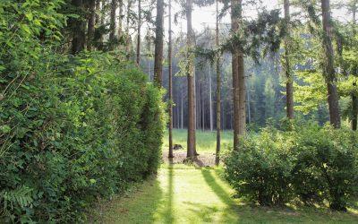 Projet : Un nouveau jardin de château en Normandie