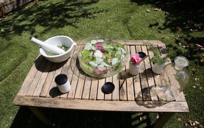Jardins & Plantes Médicinales